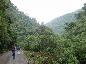 walking in the rain forest