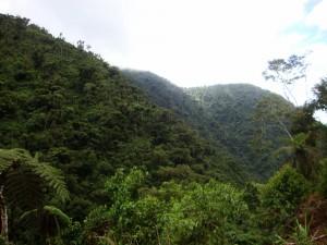 Manu rain forest