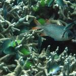 Cairns2010 079