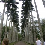 The giant palm trees--some were saying it looked like Beverly Hills