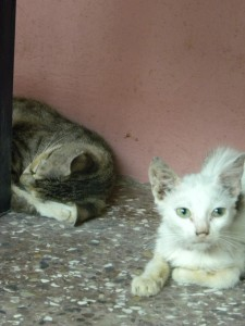 There were all sorts of kittens running around and napping :)