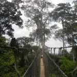 One of the canopy bridges we walked across.