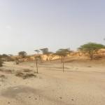 The teaser desert :)